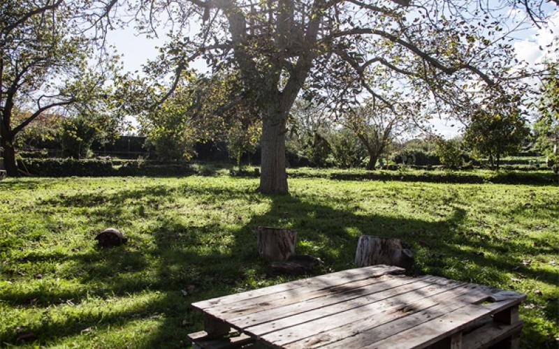 Il nostro giardino l 39 albero di alberto - Il giardino italiano ...